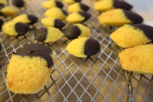 chocolate and lemon madeleines