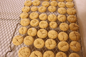 cooling gingersnaps